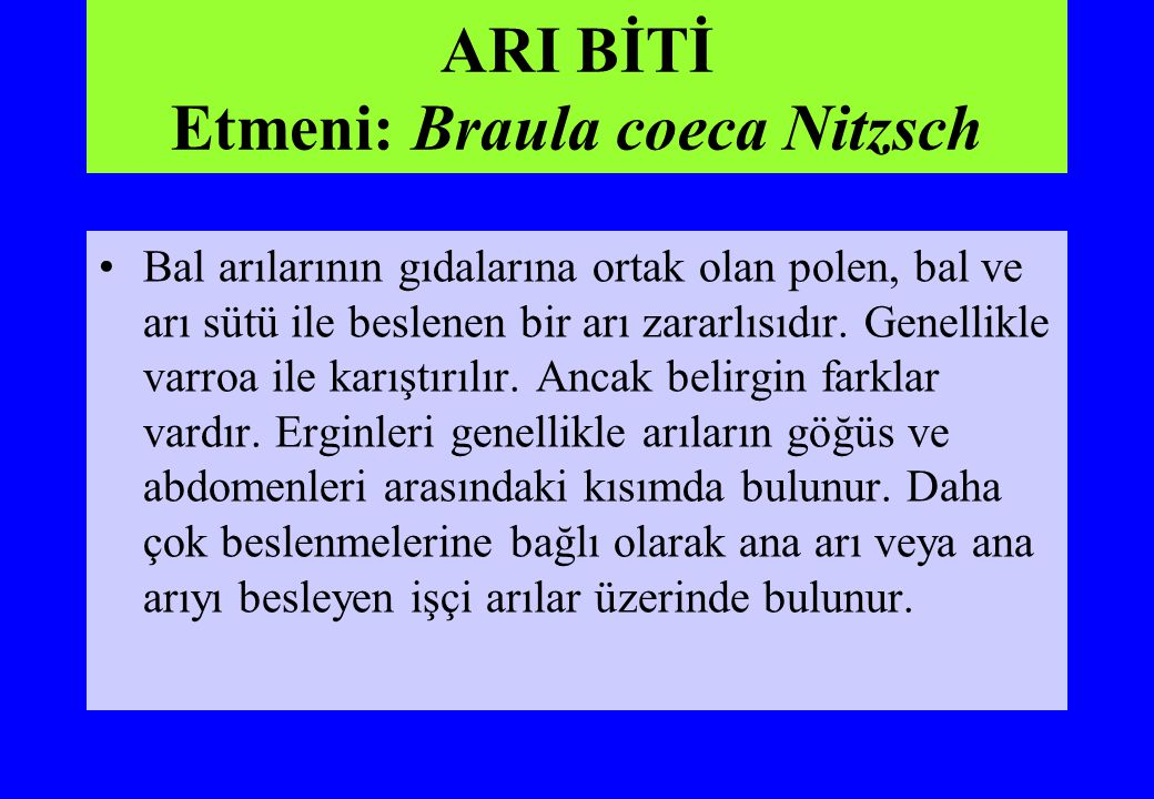 ARI BİTİ Etmeni: Braula coeca Nitzsch