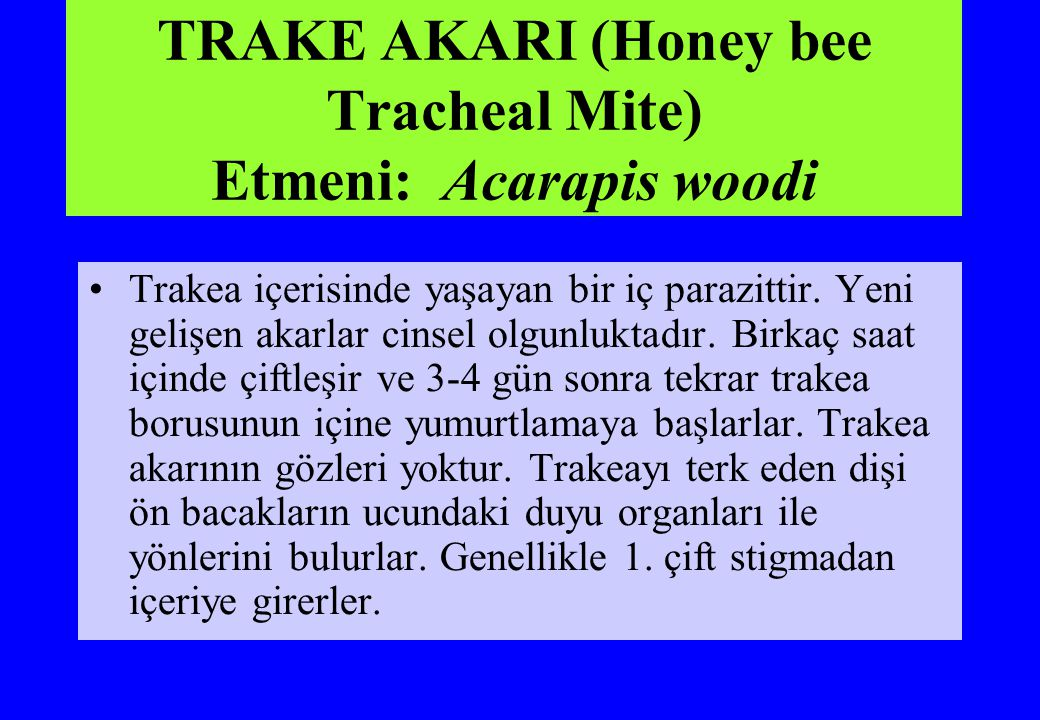 TRAKE AKARI (Honey bee Tracheal Mite) Etmeni: Acarapis woodi