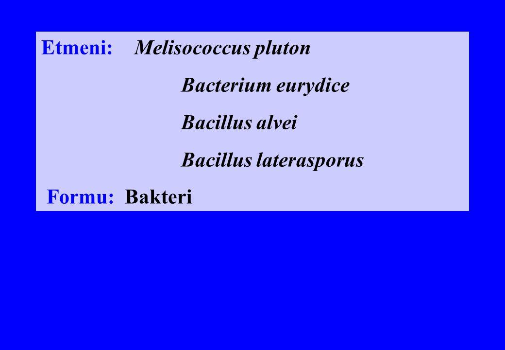 Etmeni: Melisococcus pluton