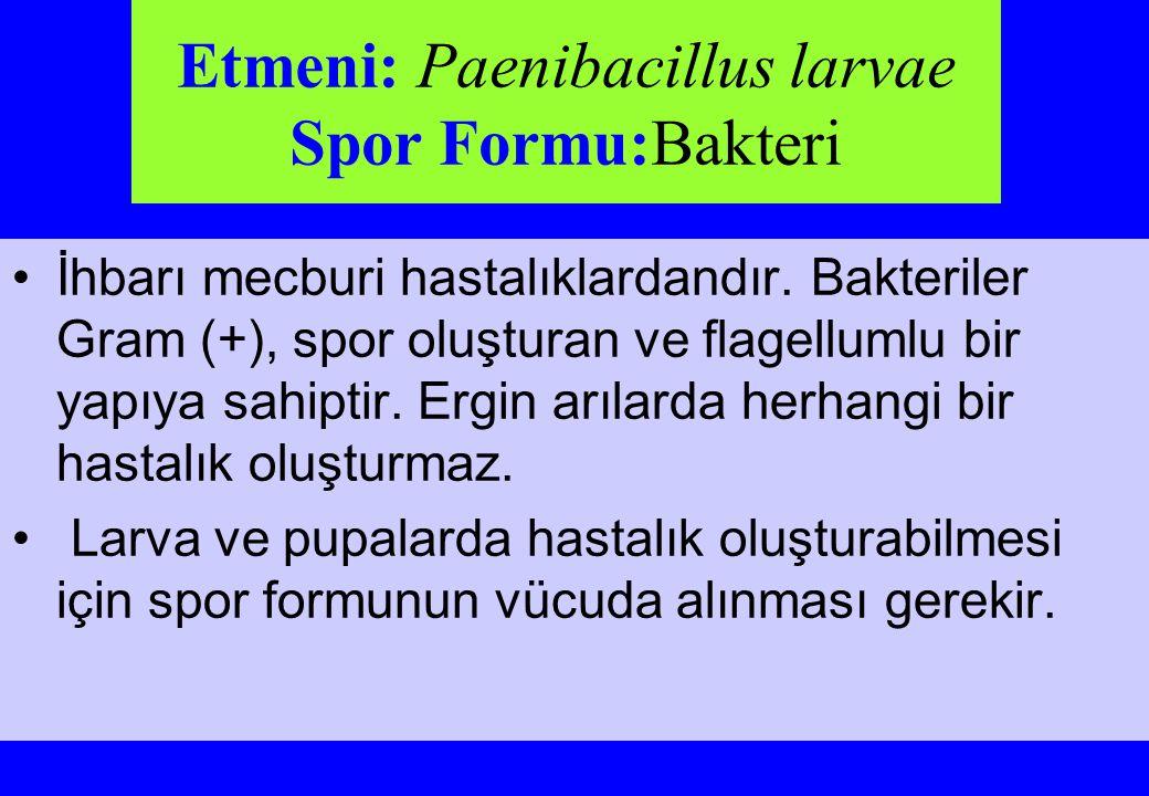 Etmeni: Paenibacillus larvae Spor Formu:Bakteri