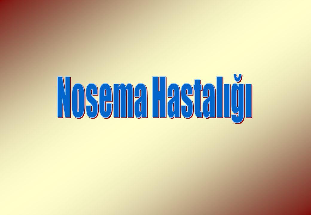 Nosema Hastalığı