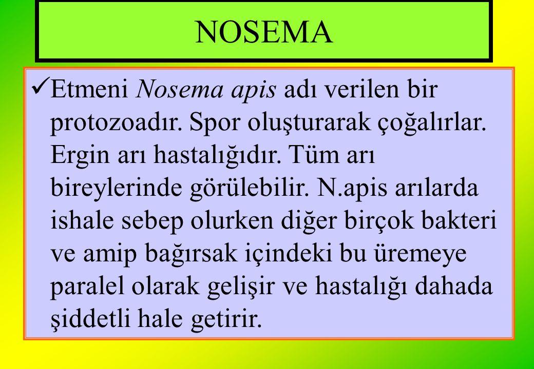 NOSEMA