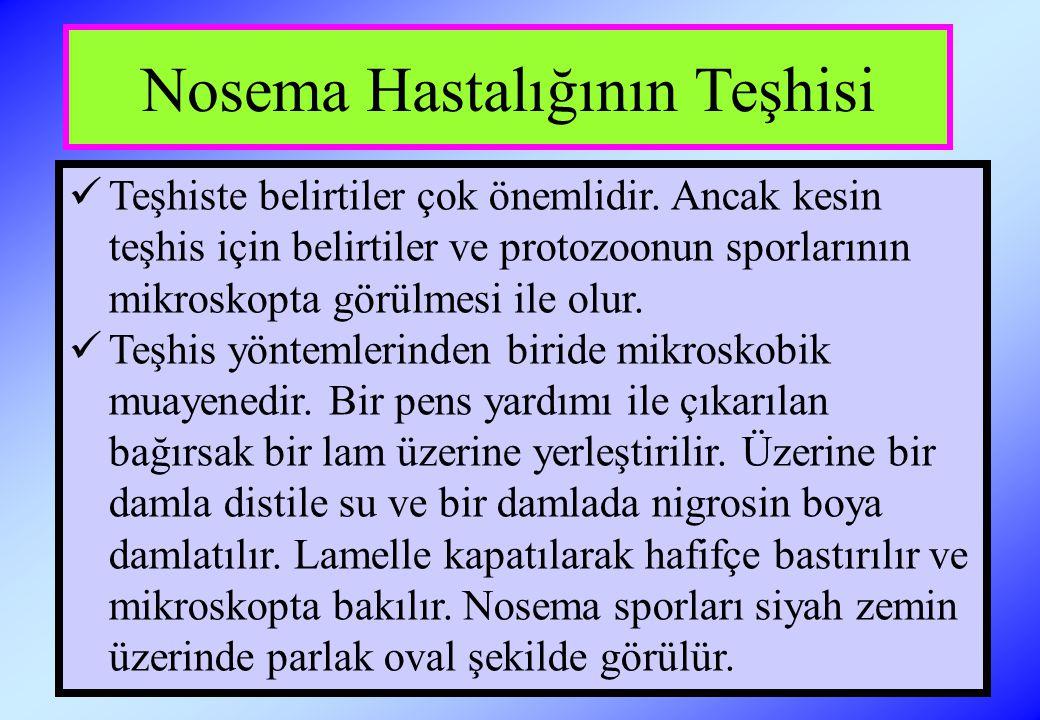 Nosema Hastalığının Teşhisi