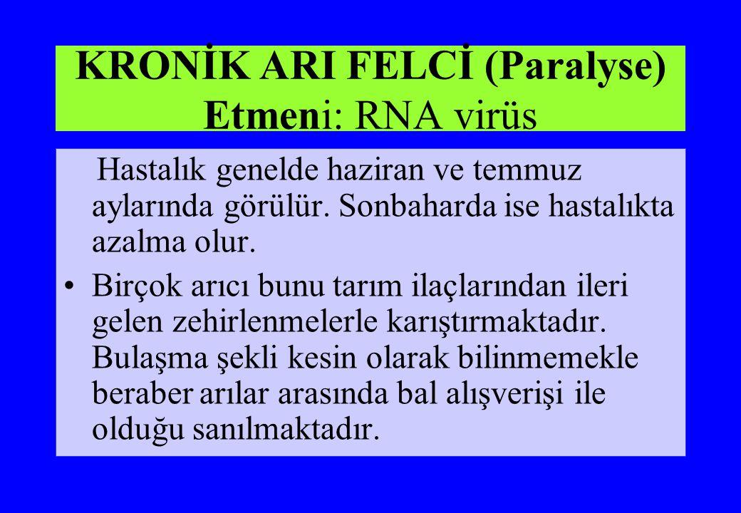 KRONİK ARI FELCİ (Paralyse) Etmeni: RNA virüs