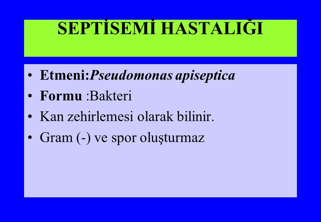 SEPTİSEMİ HASTALIĞI Etmeni:Pseudomonas apiseptica Formu :Bakteri