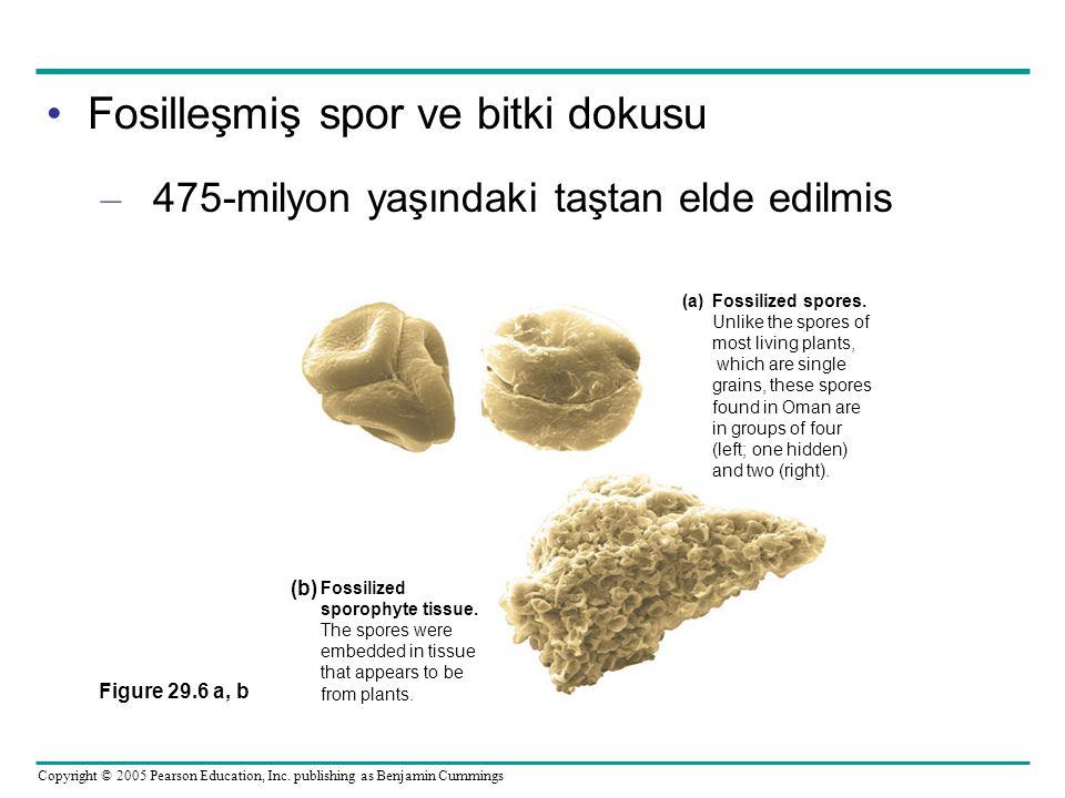 Fosilleşmiş spor ve bitki dokusu