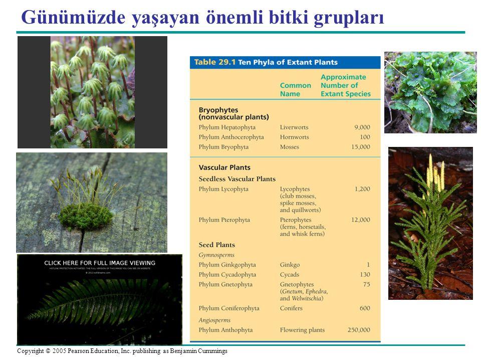 Günümüzde yaşayan önemli bitki grupları