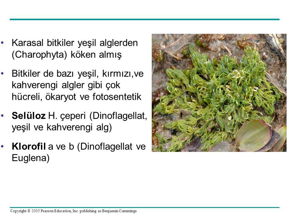 Karasal bitkiler yeşil alglerden (Charophyta) köken almış
