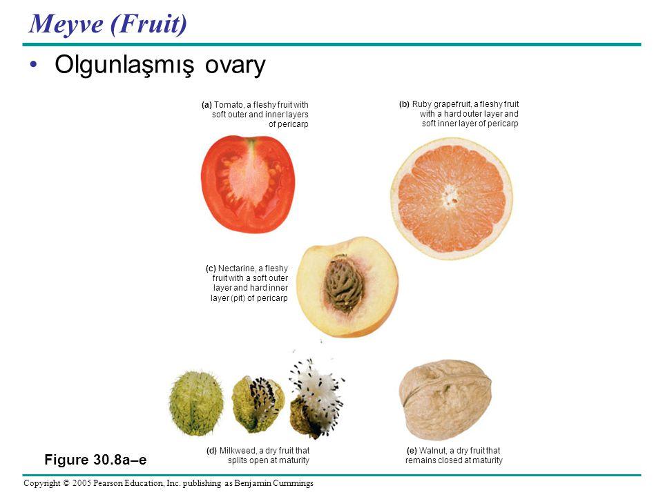 Meyve (Fruit) Olgunlaşmış ovary Figure 30.8a–e