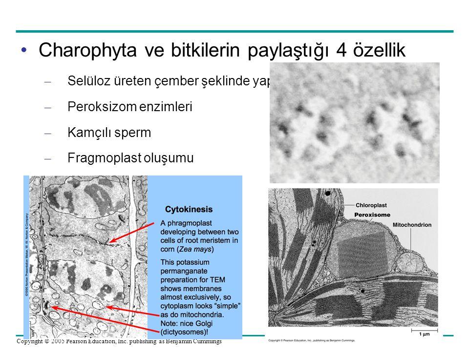 Charophyta ve bitkilerin paylaştığı 4 özellik