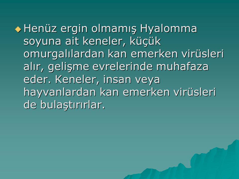 Henüz ergin olmamış Hyalomma soyuna ait keneler, küçük omurgalılardan kan emerken virüsleri alır, gelişme evrelerinde muhafaza eder.