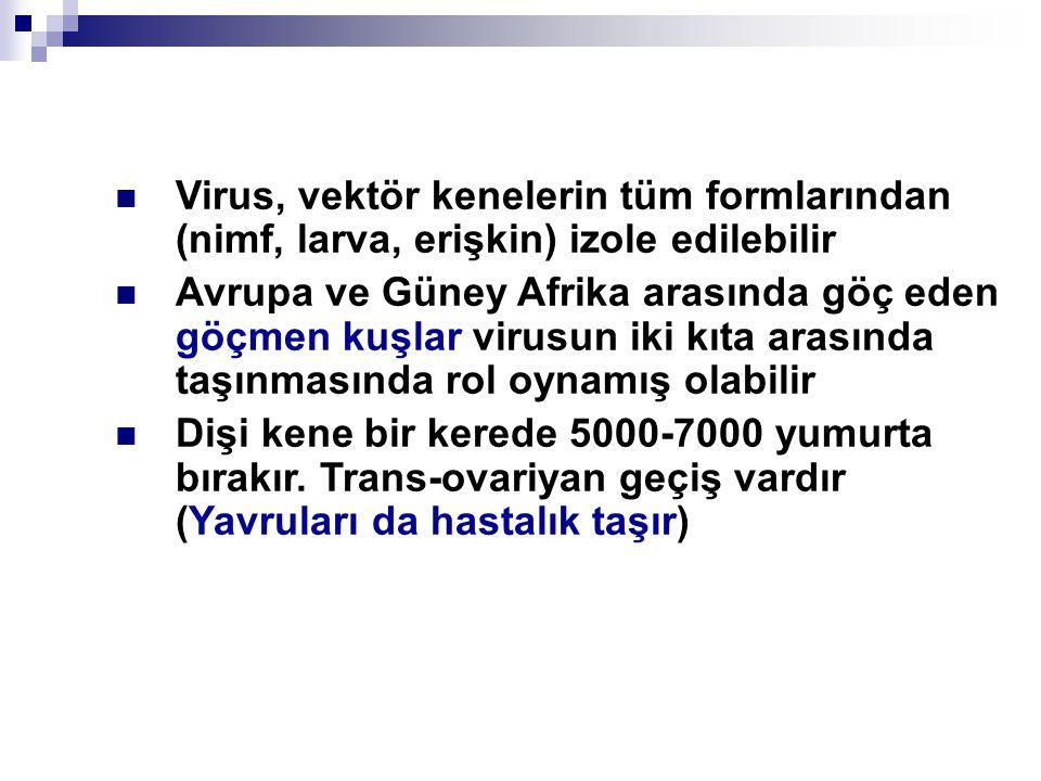 Virus, vektör kenelerin tüm formlarından (nimf, larva, erişkin) izole edilebilir