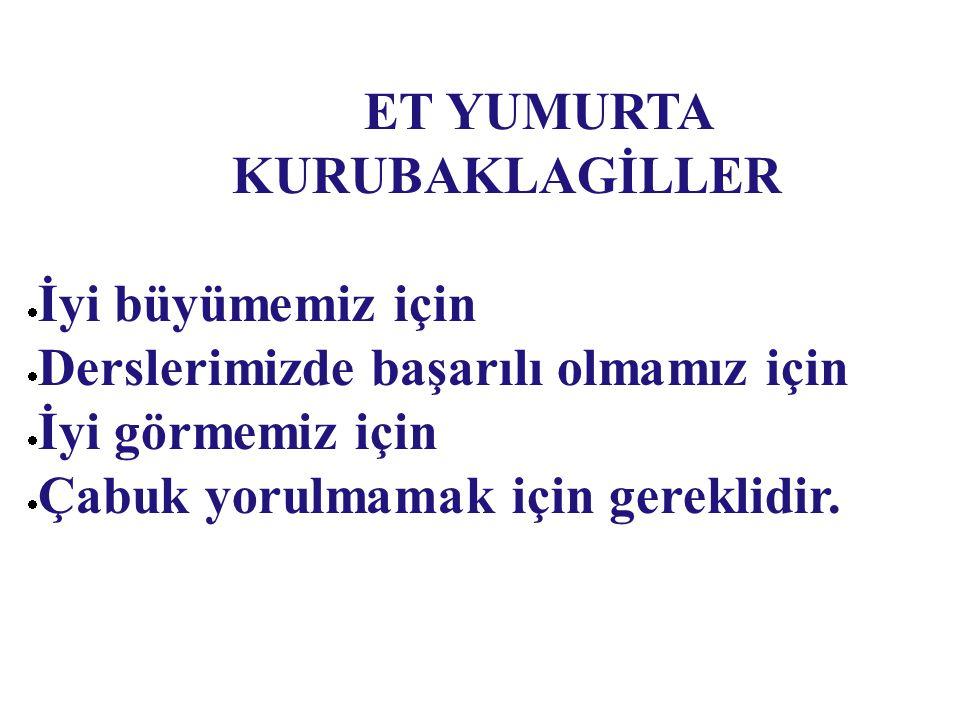 ET YUMURTA KURUBAKLAGİLLER