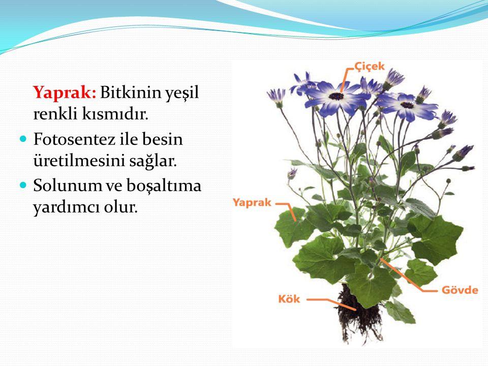 Yaprak: Bitkinin yeşil renkli kısmıdır.