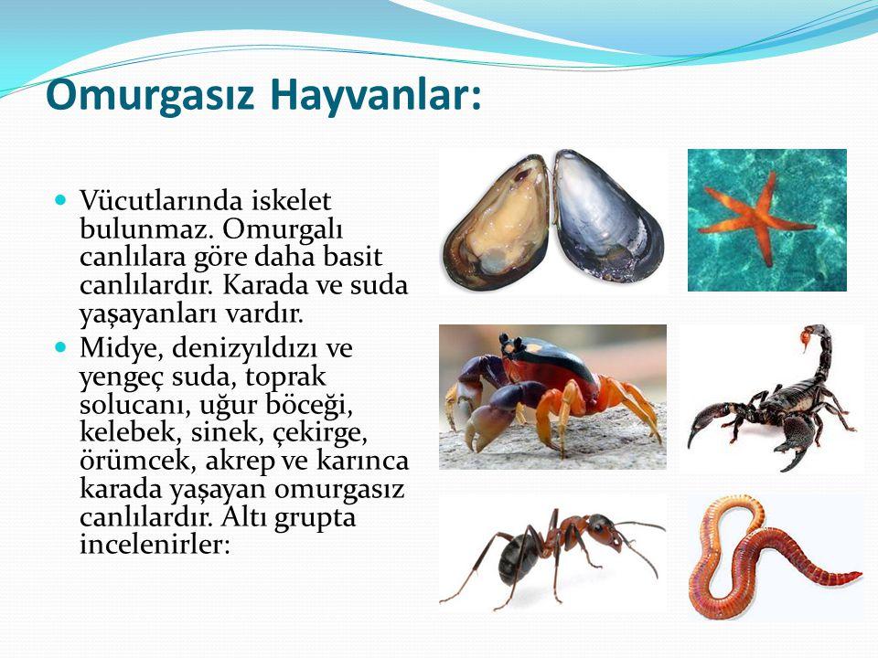 Omurgasız Hayvanlar: Vücutlarında iskelet bulunmaz. Omurgalı canlılara göre daha basit canlılardır. Karada ve suda yaşayanları vardır.
