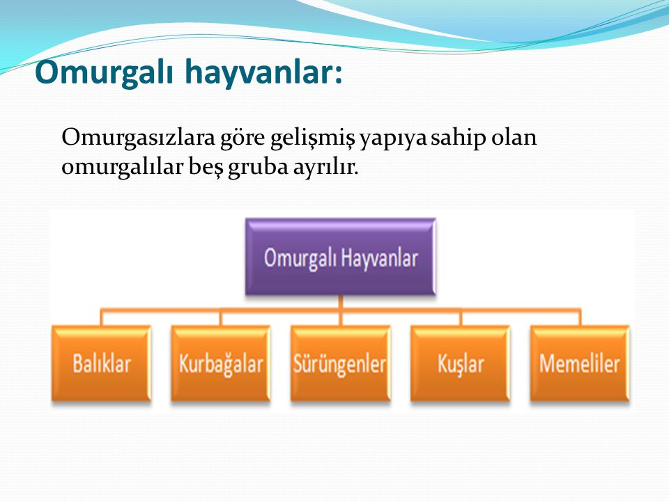 Omurgalı hayvanlar: Omurgasızlara göre gelişmiş yapıya sahip olan omurgalılar beş gruba ayrılır.