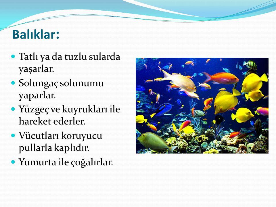 Balıklar: Tatlı ya da tuzlu sularda yaşarlar.