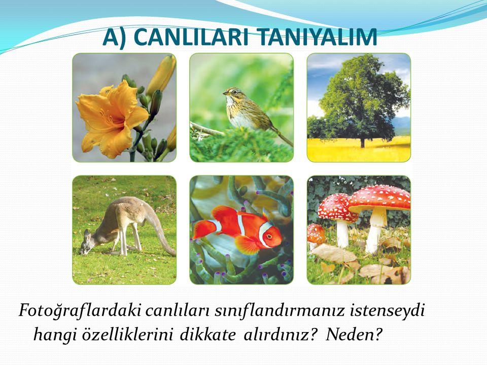 A) CANLILARI TANIYALIM