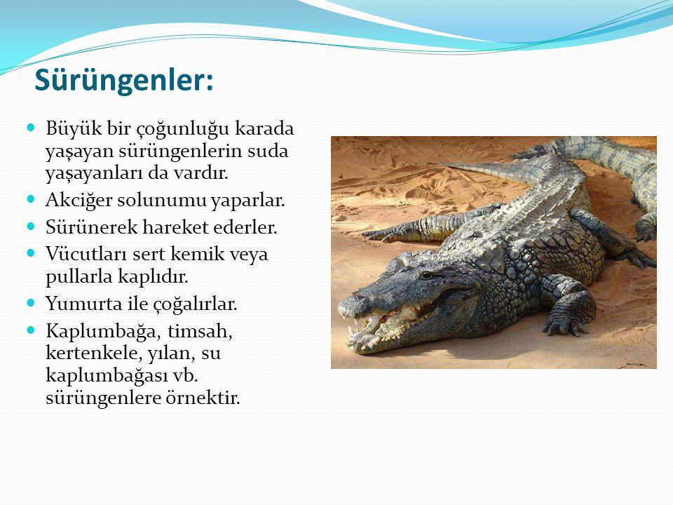 Sürüngenler: Büyük bir çoğunluğu karada yaşayan sürüngenlerin suda yaşayanları da vardır. Akciğer solunumu yaparlar.