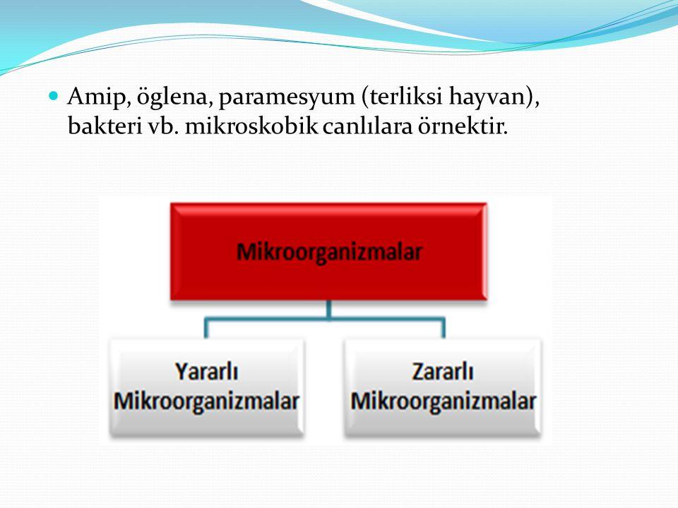 Amip, öglena, paramesyum (terliksi hayvan), bakteri vb