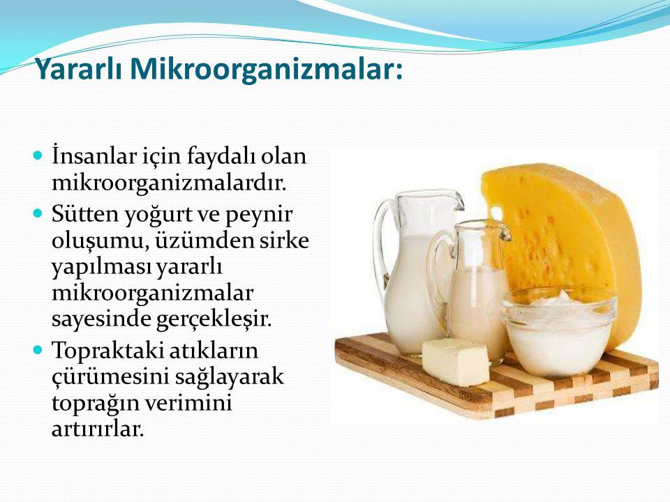Yararlı Mikroorganizmalar: