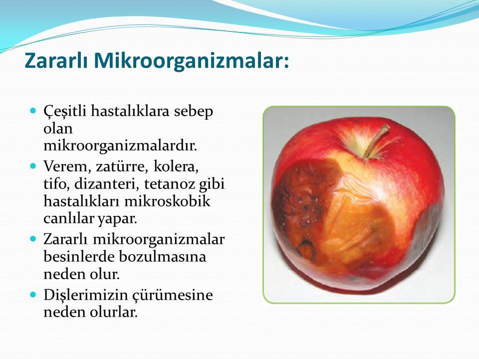 Zararlı Mikroorganizmalar: