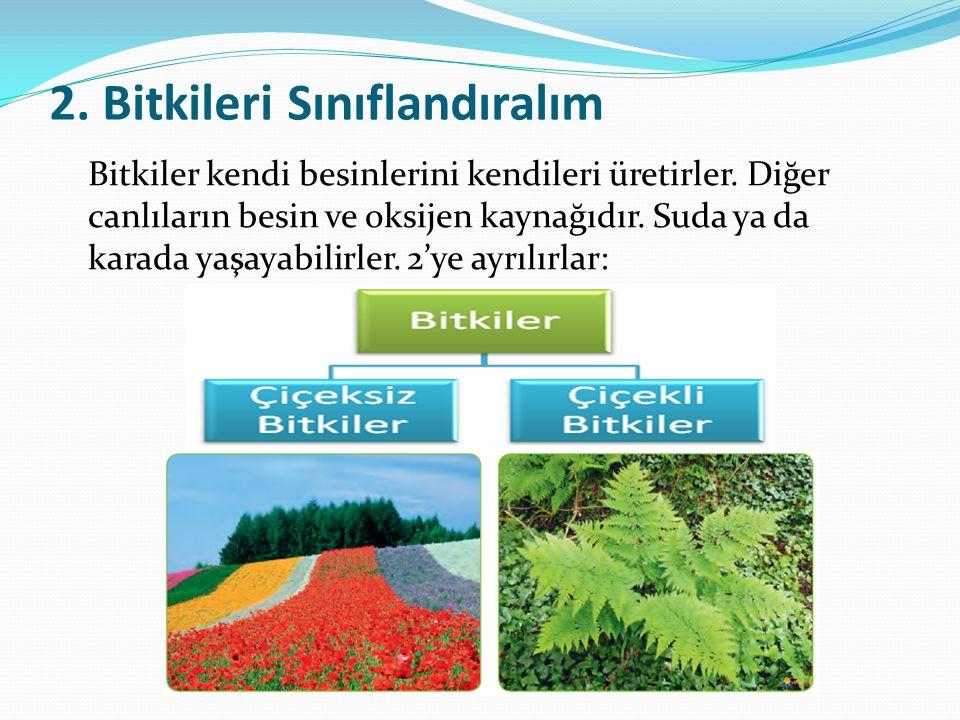 2. Bitkileri Sınıflandıralım