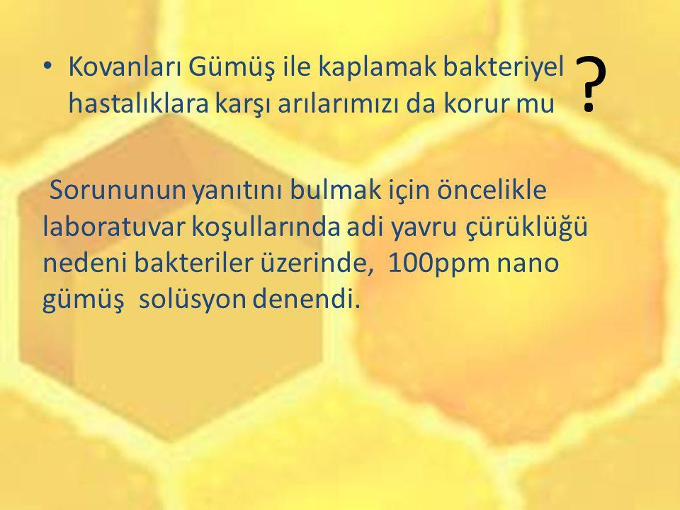 Kovanları Gümüş ile kaplamak bakteriyel hastalıklara karşı arılarımızı da korur mu