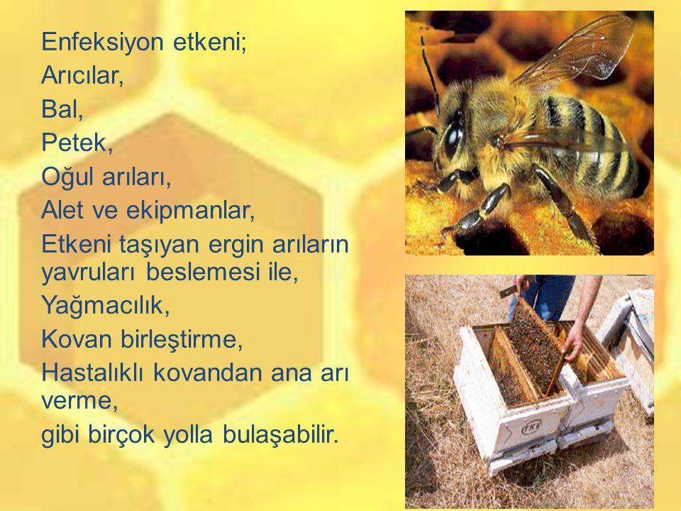 Enfeksiyon etkeni; Arıcılar, Bal, Petek, Oğul arıları, Alet ve ekipmanlar, Etkeni taşıyan ergin arıların yavruları beslemesi ile, Yağmacılık, Kovan birleştirme, Hastalıklı kovandan ana arı verme, gibi birçok yolla bulaşabilir.