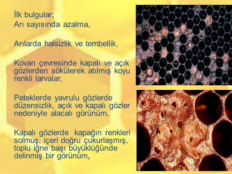 İlk bulgular; Arı sayısında azalma, Arılarda halsizlik ve tembellik, Kovan çevresinde kapalı ve açık gözlerden sökülerek atılmış koyu renkli larvalar, Peteklerde yavrulu gözlerde düzensizlik, açık ve kapalı gözler nedeniyle alacalı görünüm, Kapalı gözlerde kapağın renkleri solmuş, içeri doğru çukurlaşmış, toplu iğne başı büyüklüğünde delinmiş bir görünüm,