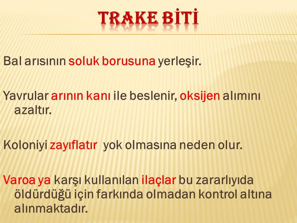 TRAKE BİTİ