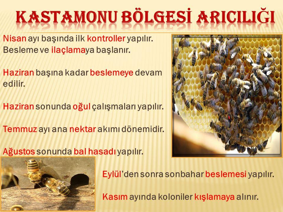KAstamonu BÖLGESİ ARICILIĞI
