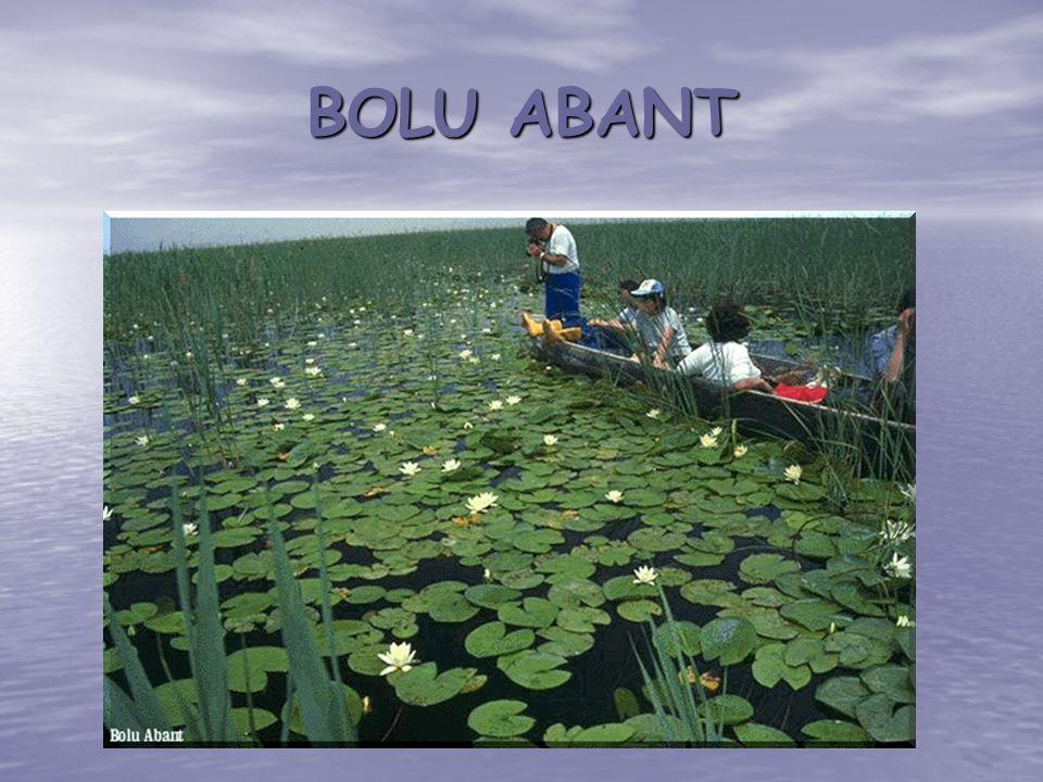 BOLU ABANT