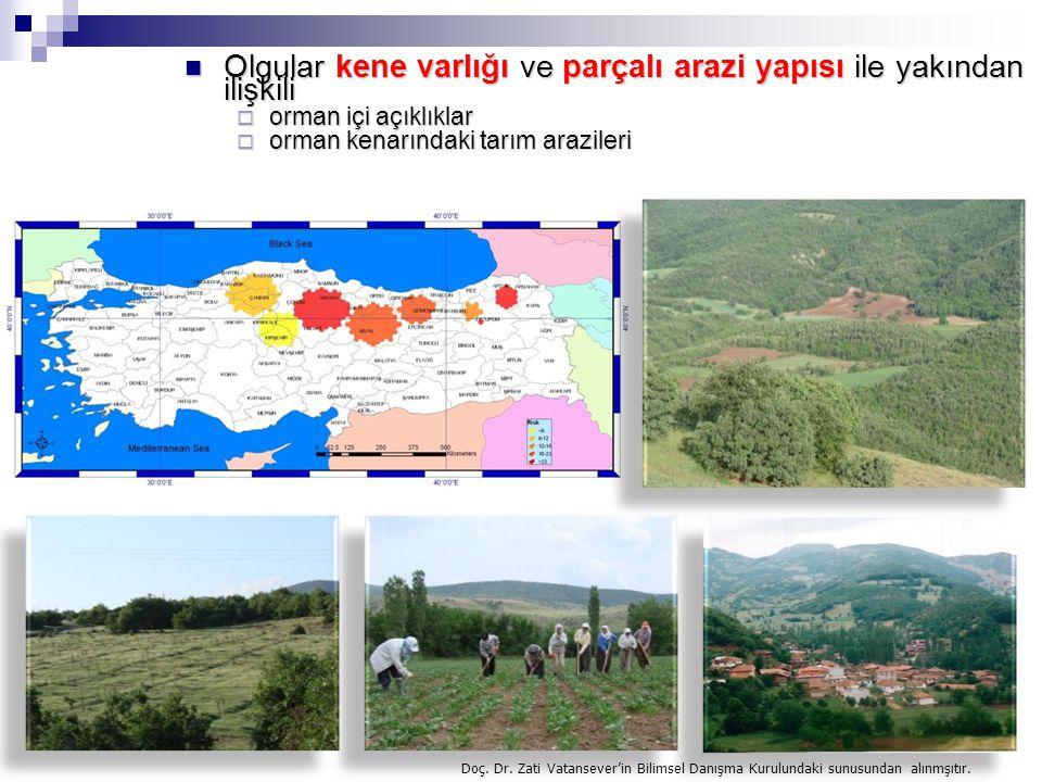 Olgular kene varlığı ve parçalı arazi yapısı ile yakından ilişkili