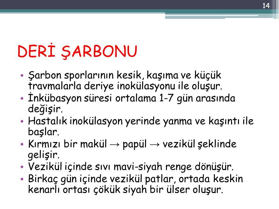DERİ ŞARBONU Şarbon sporlarının kesik, kaşıma ve küçük travmalarla deriye inokülasyonu ile oluşur.