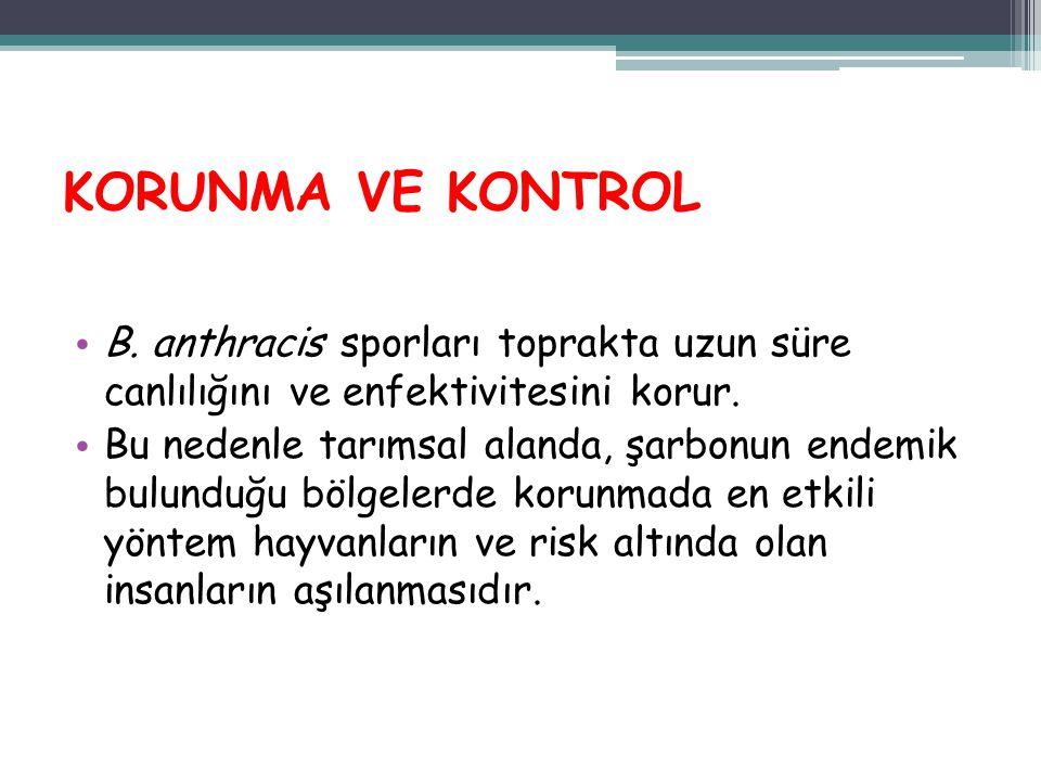 KORUNMA VE KONTROL B. anthracis sporları toprakta uzun süre canlılığını ve enfektivitesini korur.