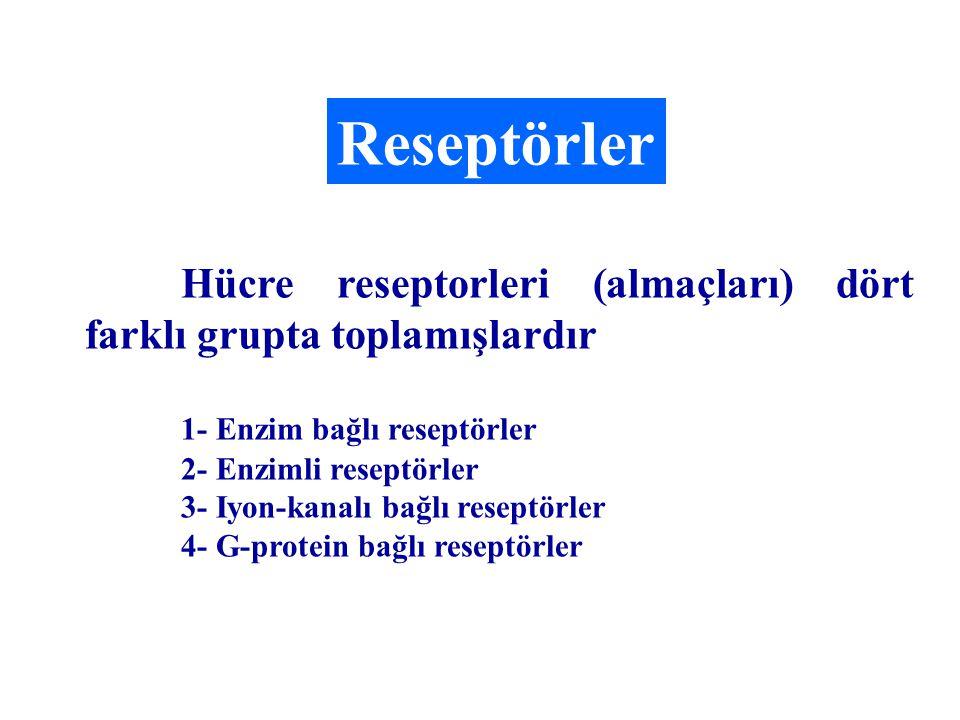 Reseptörler Hücre reseptorleri (almaçları) dört farklı grupta toplamışlardır. 1- Enzim bağlı reseptörler.