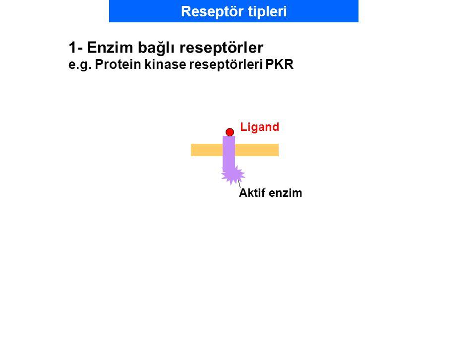 1- Enzim bağlı reseptörler