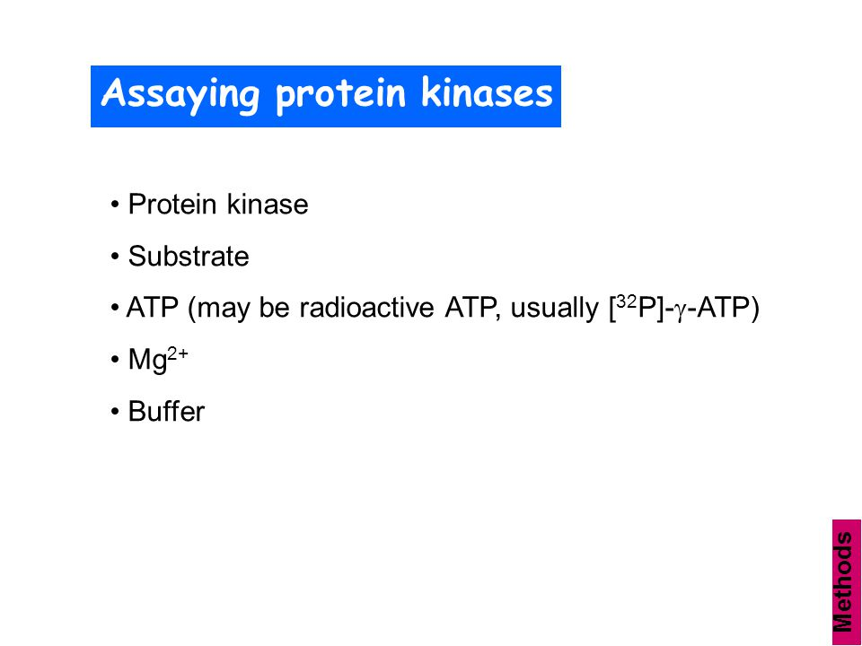 Assaying protein kinases