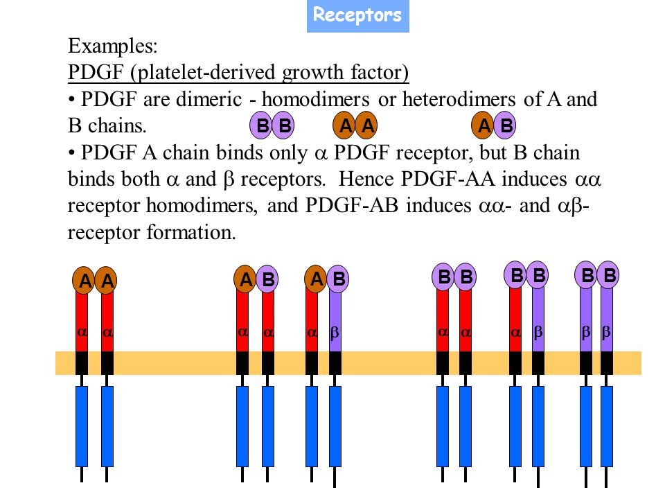 PDGF (platelet-derived growth factor)