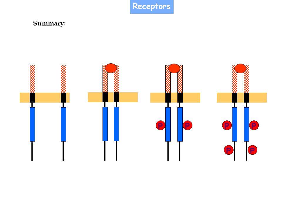 Receptors Summary: P P P P P P