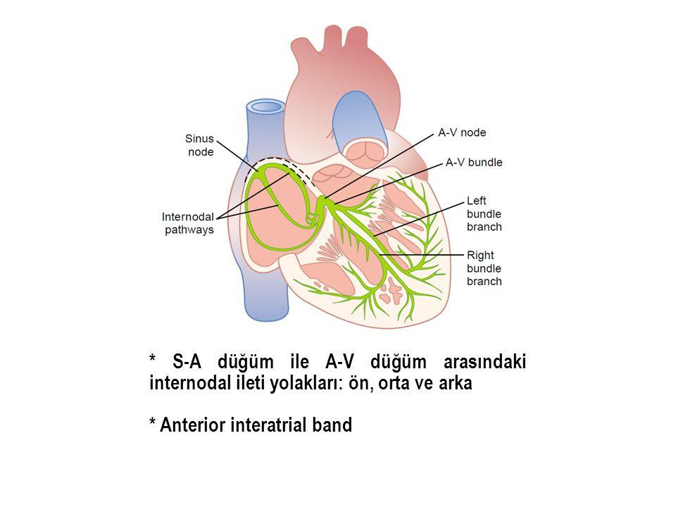 * S-A düğüm ile A-V düğüm arasındaki internodal ileti yolakları: ön, orta ve arka