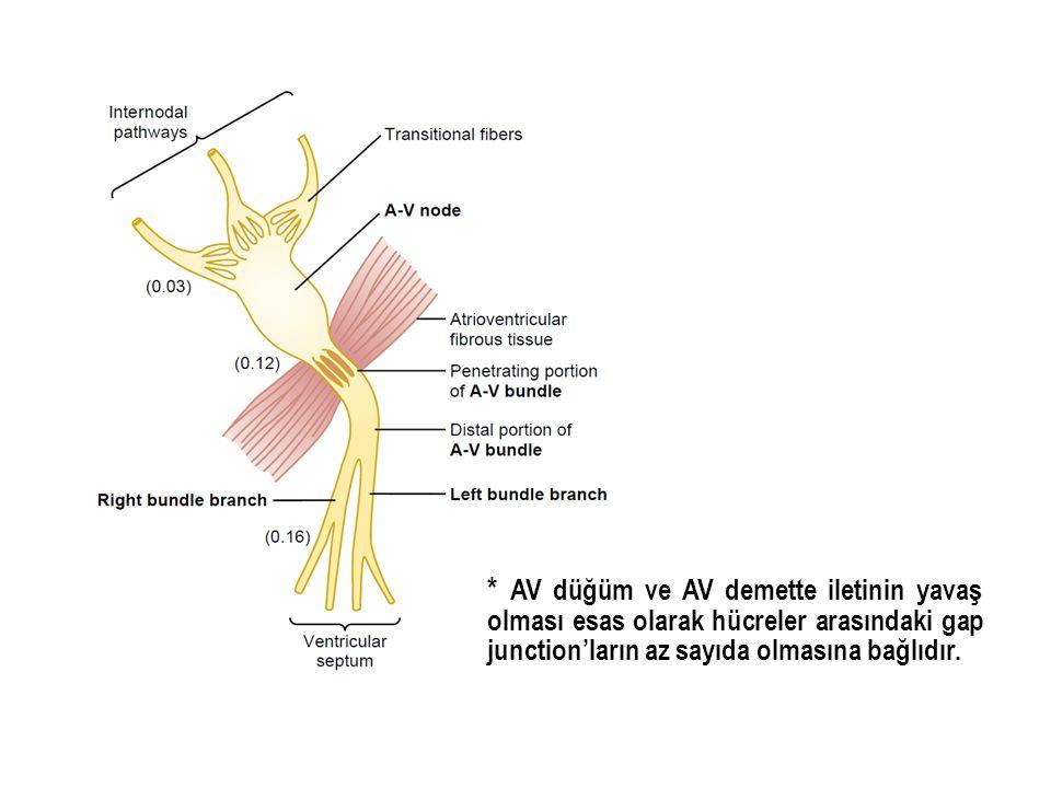* AV düğüm ve AV demette iletinin yavaş olması esas olarak hücreler arasındaki gap junction'ların az sayıda olmasına bağlıdır.