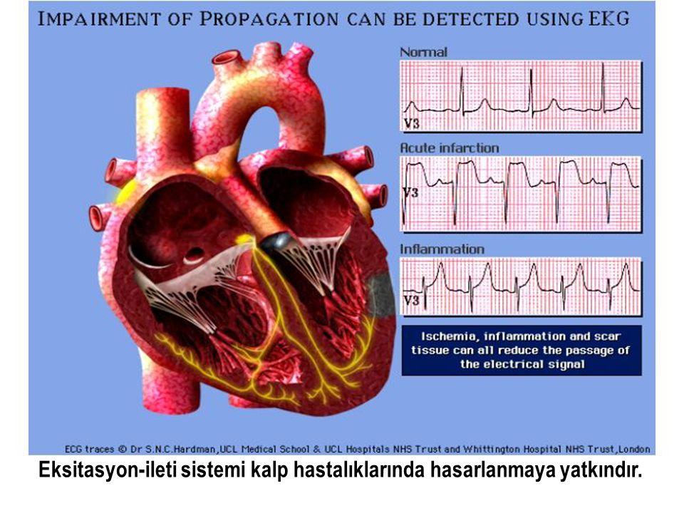 Eksitasyon-ileti sistemi kalp hastalıklarında hasarlanmaya yatkındır.