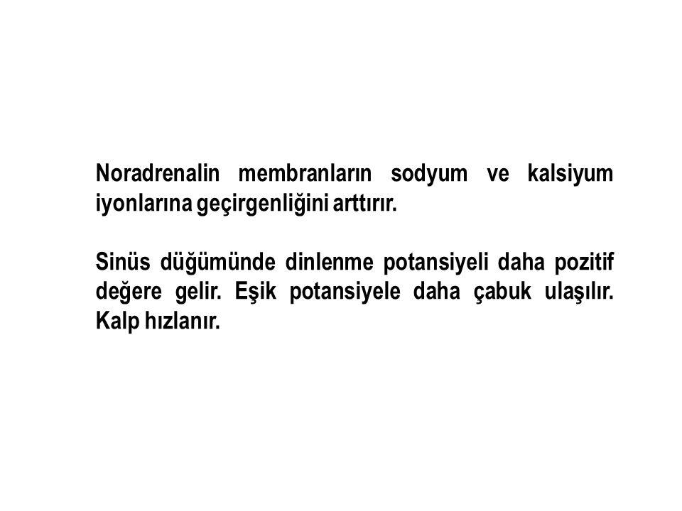 Noradrenalin membranların sodyum ve kalsiyum iyonlarına geçirgenliğini arttırır.