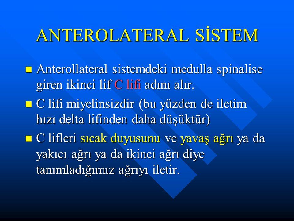ANTEROLATERAL SİSTEM Anterollateral sistemdeki medulla spinalise giren ikinci lif C lifi adını alır.