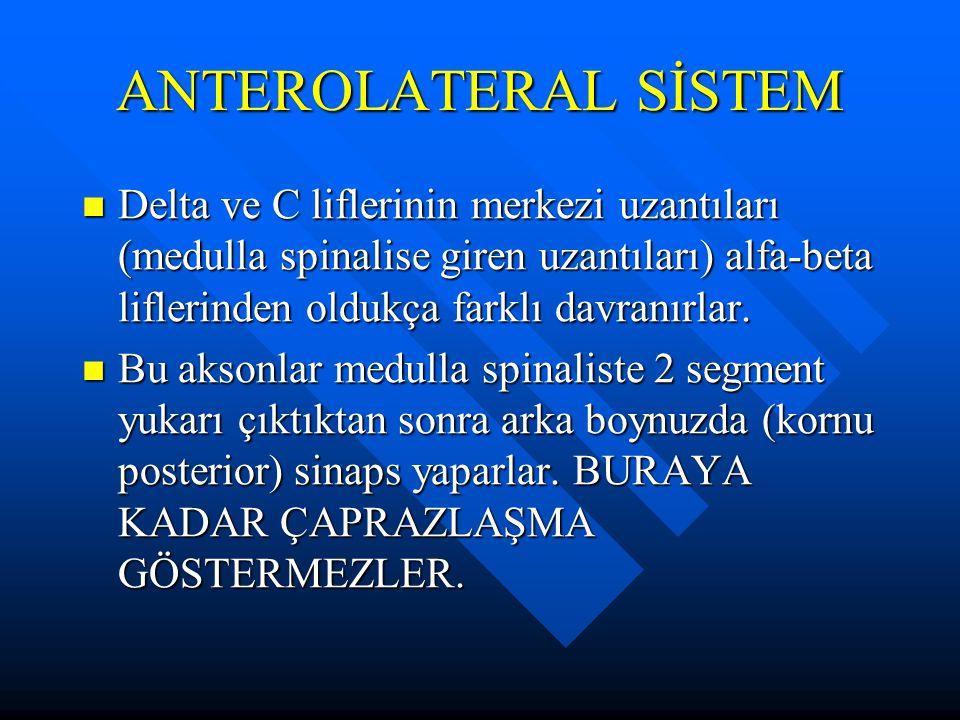 ANTEROLATERAL SİSTEM Delta ve C liflerinin merkezi uzantıları (medulla spinalise giren uzantıları) alfa-beta liflerinden oldukça farklı davranırlar.
