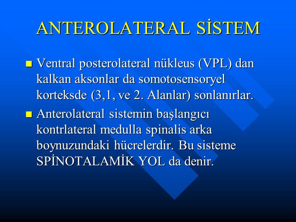 ANTEROLATERAL SİSTEM Ventral posterolateral nükleus (VPL) dan kalkan aksonlar da somotosensoryel korteksde (3,1, ve 2. Alanlar) sonlanırlar.