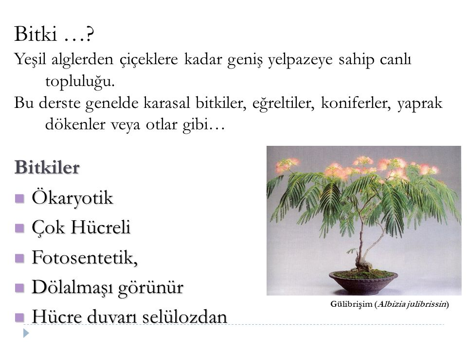 Bitki … Bitkiler Ökaryotik Çok Hücreli Fotosentetik,