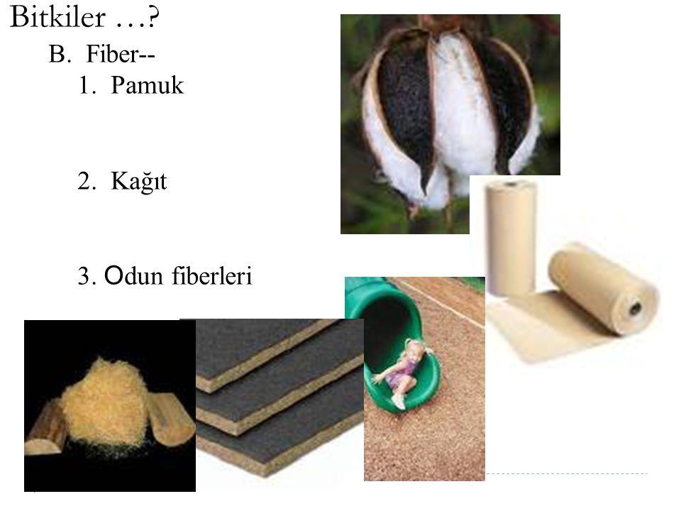 Bitkiler … B. Fiber-- 1. Pamuk 2. Kağıt 3. Odun fiberleri
